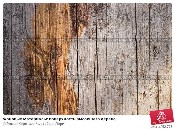 Купить «Фоновые материалы: поверхность высохшего дерева», фото № 52775, снято 10 июня 2007 г. (c) Роман Коротаев / Фотобанк Лори