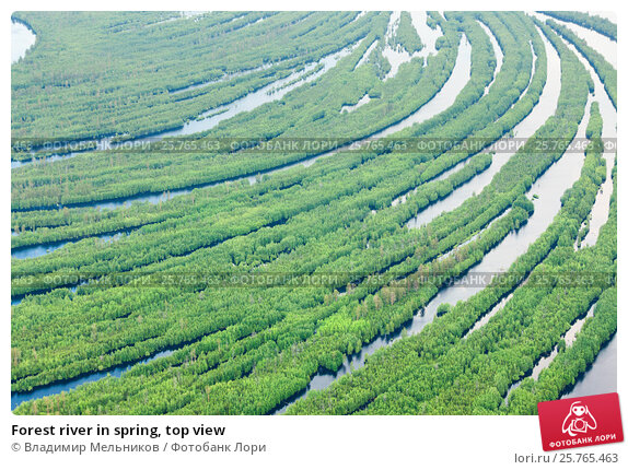 Forest river in spring, top view, фото № 25765463, снято 19 июня 2015 г. (c) Владимир Мельников / Фотобанк Лори
