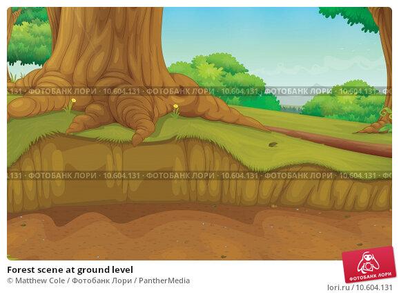 Forest scene at ground level. Стоковая иллюстрация, иллюстратор Matthew Cole / PantherMedia / Фотобанк Лори