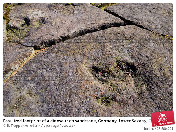 Купить «Fossilized footprint of a dinosaur on sandstone, Germany, Lower Saxony, Obernkirchener Sandsteinbrueche, Obernkirchen», фото № 26500291, снято 18 июля 2014 г. (c) age Fotostock / Фотобанк Лори