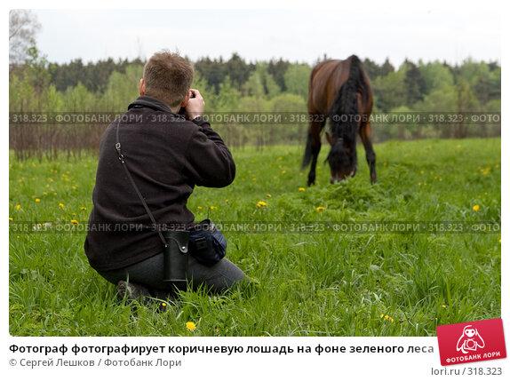 Фотограф фотографирует коричневую лошадь на фоне зеленого леса, фото № 318323, снято 18 мая 2008 г. (c) Сергей Лешков / Фотобанк Лори