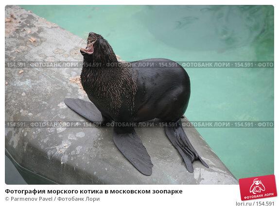 Фотография морского котика в московском зоопарке, фото № 154591, снято 11 декабря 2007 г. (c) Parmenov Pavel / Фотобанк Лори