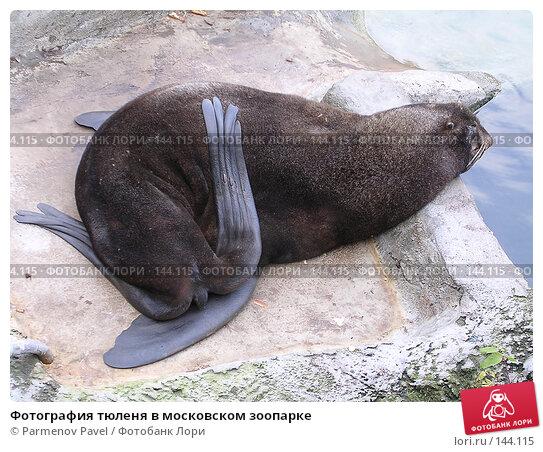 Фотография тюленя в московском зоопарке, фото № 144115, снято 8 ноября 2004 г. (c) Parmenov Pavel / Фотобанк Лори
