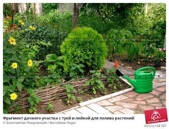 Фрагмент дачного участка с туей и лейкой для полива растений, фото № 64167, снято 21 июля 2007 г. (c) Константин Покровский / Фотобанк Лори