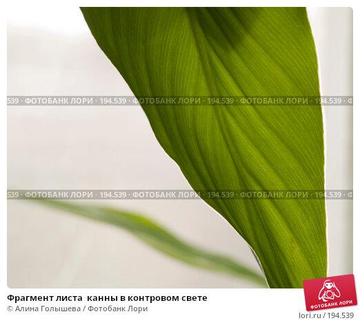 Фрагмент листа  канны в контровом свете, эксклюзивное фото № 194539, снято 3 февраля 2008 г. (c) Алина Голышева / Фотобанк Лори