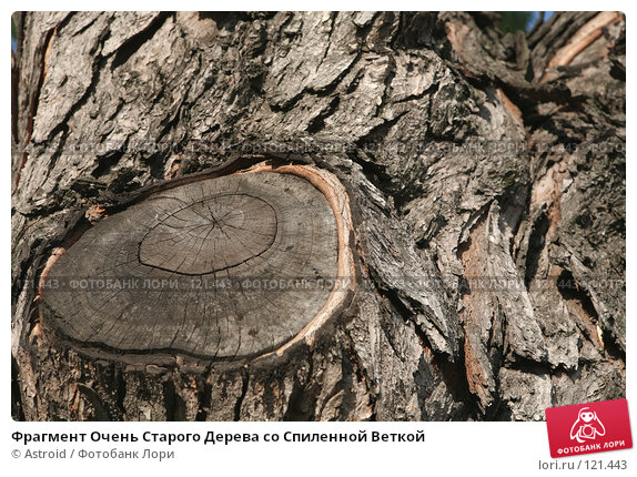 Фрагмент Очень Старого Дерева со Спиленной Веткой, фото № 121443, снято 28 октября 2016 г. (c) Astroid / Фотобанк Лори