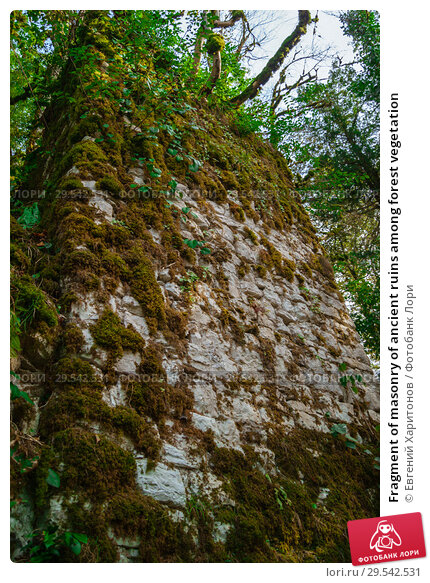 Купить «Fragment of masonry of ancient ruins among forest vegetation», фото № 29542531, снято 26 сентября 2017 г. (c) Евгений Харитонов / Фотобанк Лори