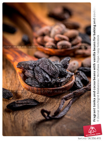 Fragrant tonka and cocoa beans with vanilla beans for baking and cooking... Стоковое фото, фотограф Zoonar.com/Ingrid Balabanova / easy Fotostock / Фотобанк Лори