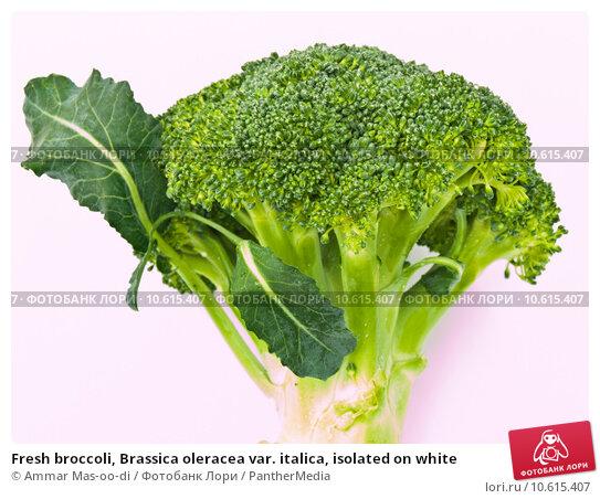 Fresh broccoli, Brassica oleracea var. italica, isolated on white. Стоковое фото, фотограф Ammar Mas-oo-di / PantherMedia / Фотобанк Лори