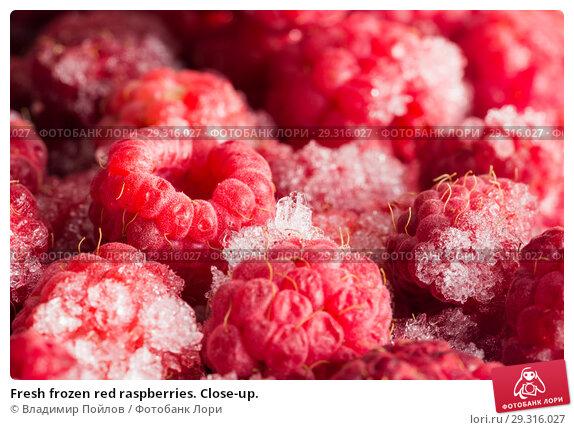 Купить «Fresh frozen red raspberries. Close-up.», фото № 29316027, снято 19 ноября 2018 г. (c) Владимир Пойлов / Фотобанк Лори