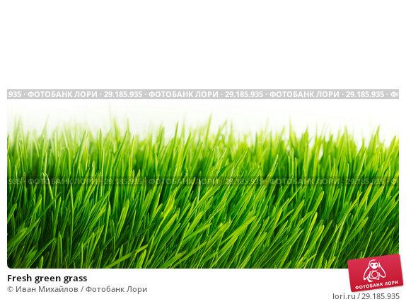 Купить «Fresh green grass», фото № 29185935, снято 3 апреля 2014 г. (c) Иван Михайлов / Фотобанк Лори