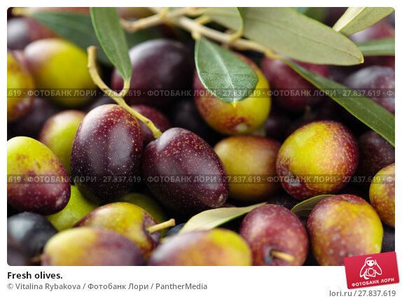 Купить «Fresh olives.», фото № 27837619, снято 20 февраля 2018 г. (c) PantherMedia / Фотобанк Лори