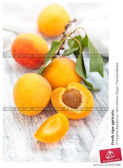 Купить «Fresh ripe apricots .», фото № 27837595, снято 22 февраля 2018 г. (c) PantherMedia / Фотобанк Лори