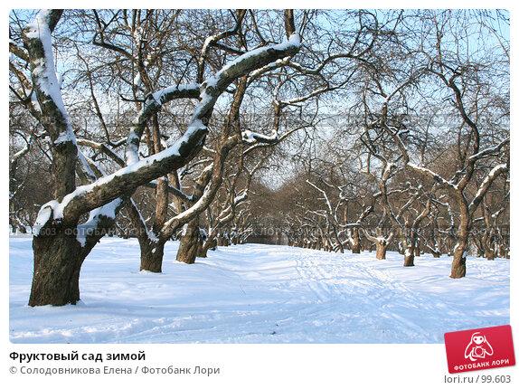 Фруктовый сад зимой, фото № 99603, снято 27 января 2007 г. (c) Солодовникова Елена / Фотобанк Лори