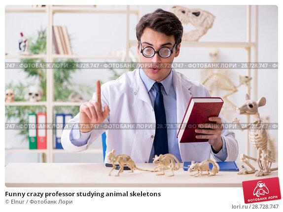 Купить «Funny crazy professor studying animal skeletons», фото № 28728747, снято 7 марта 2018 г. (c) Elnur / Фотобанк Лори