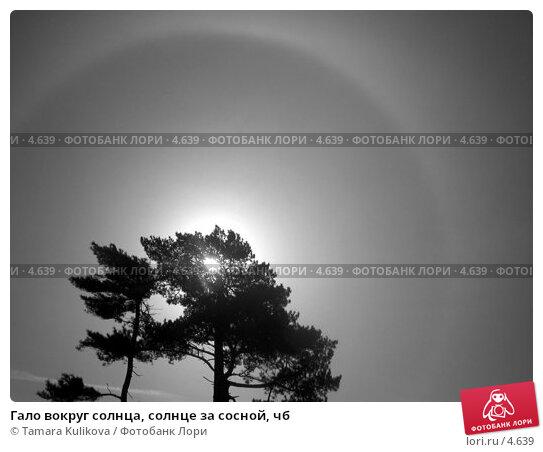 Гало вокруг солнца, солнце за сосной, чб, фото № 4639, снято 4 апреля 2004 г. (c) Tamara Kulikova / Фотобанк Лори
