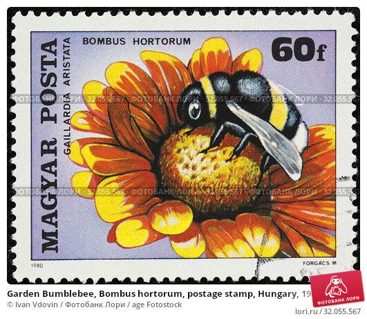 Garden Bumblebee, Bombus hortorum, postage stamp, Hungary, 1980. (2014 год). Редакционное фото, фотограф Ivan Vdovin / age Fotostock / Фотобанк Лори