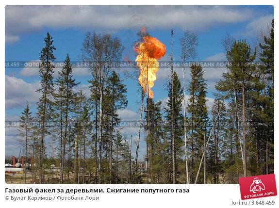 Купить «Газовый факел за деревьями. Сжигание попутного газа», фото № 3648459, снято 18 мая 2012 г. (c) Булат Каримов / Фотобанк Лори