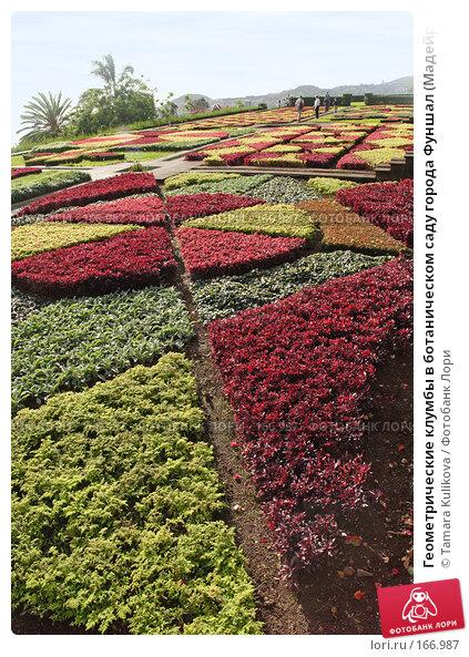 Геометрические клумбы в ботаническом саду города Фуншал (Мадейра), фото № 166987, снято 2 января 2008 г. (c) Tamara Kulikova / Фотобанк Лори