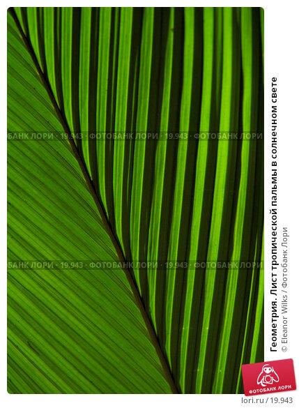 Купить «Геометрия. Лист тропической пальмы в солнечном свете», фото № 19943, снято 11 февраля 2007 г. (c) Eleanor Wilks / Фотобанк Лори
