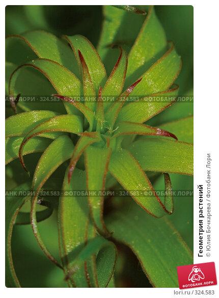 Геометрия растений, фото № 324583, снято 26 мая 2007 г. (c) Юлия Бочкарева / Фотобанк Лори