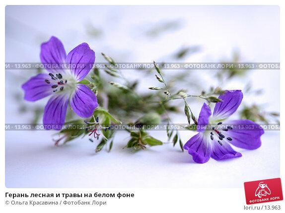Купить «Герань лесная и травы на белом фоне», фото № 13963, снято 1 июля 2006 г. (c) Ольга Красавина / Фотобанк Лори