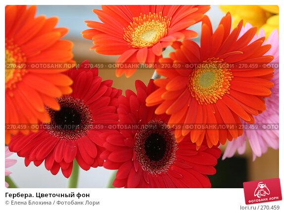 Гербера. Цветочный фон, фото № 270459, снято 31 мая 2007 г. (c) Елена Блохина / Фотобанк Лори