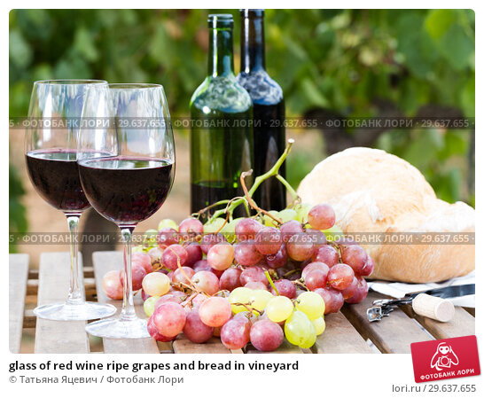 Купить «glass of red wine ripe grapes and bread in vineyard», фото № 29637655, снято 11 сентября 2017 г. (c) Татьяна Яцевич / Фотобанк Лори