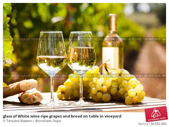 Купить «glass of White wine ripe grapes and bread on table in vineyard», фото № 30502043, снято 24 мая 2019 г. (c) Татьяна Яцевич / Фотобанк Лори