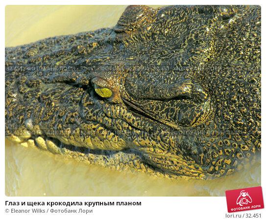 Глаз и щека крокодила крупным планом, фото № 32451, снято 21 июня 2006 г. (c) Eleanor Wilks / Фотобанк Лори