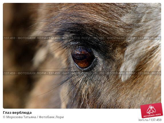 Глаз верблюда, фото № 137459, снято 12 апреля 2006 г. (c) Морозова Татьяна / Фотобанк Лори