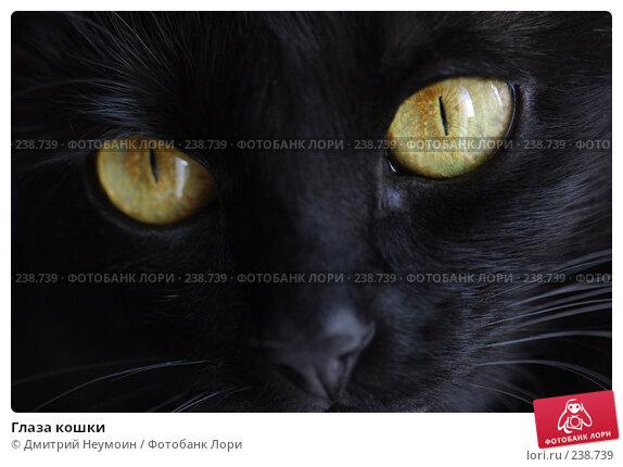 Глаза кошки, эксклюзивное фото № 238739, снято 25 мая 2017 г. (c) Дмитрий Неумоин / Фотобанк Лори