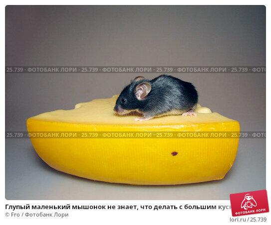 Глупый маленький мышонок не знает, что делать с большим куском сыра, фото № 25739, снято 18 марта 2007 г. (c) Fro / Фотобанк Лори