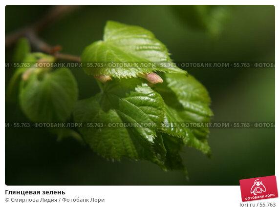 Глянцевая зелень, фото № 55763, снято 13 мая 2007 г. (c) Смирнова Лидия / Фотобанк Лори