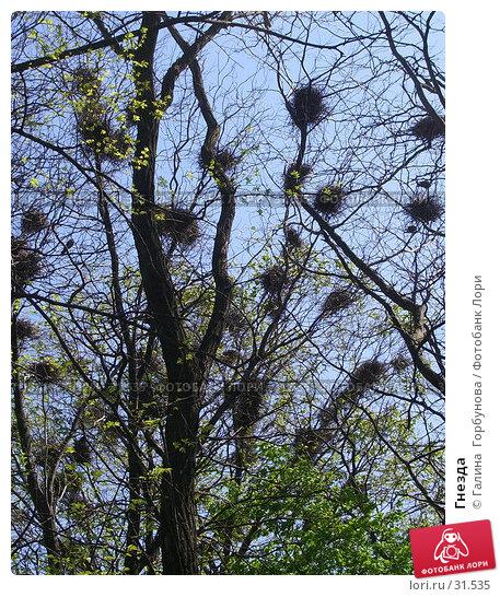 Гнезда, фото № 31535, снято 21 сентября 2017 г. (c) Галина  Горбунова / Фотобанк Лори