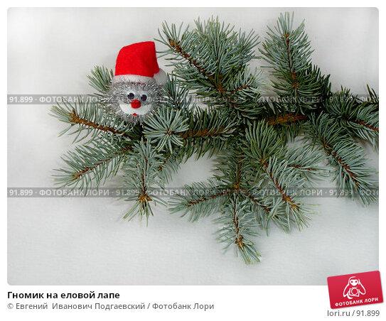 Гномик на еловой лапе, фото № 91899, снято 23 января 2017 г. (c) Евгений  Иванович Подгаевский / Фотобанк Лори
