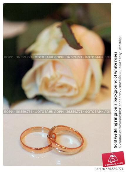 Gold wedding rings on a background of white roses. Стоковое фото, фотограф Zoonar.com/Volodymyr Khodariev / easy Fotostock / Фотобанк Лори
