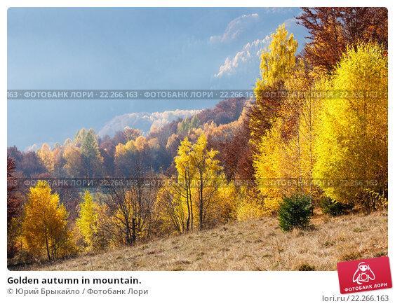 Купить «Golden autumn in mountain.», фото № 22266163, снято 5 ноября 2015 г. (c) Юрий Брыкайло / Фотобанк Лори
