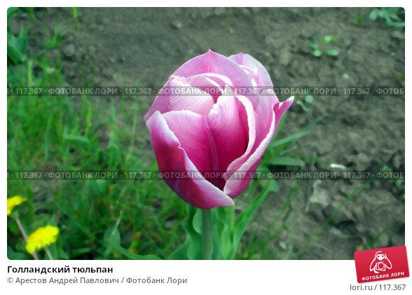 Голландский тюльпан, фото № 117367, снято 29 октября 2006 г. (c) Арестов Андрей Павлович / Фотобанк Лори