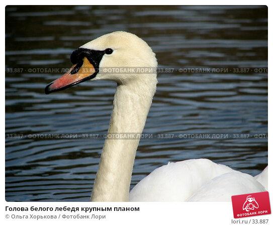 Голова белого лебедя крупным планом, фото № 33887, снято 15 апреля 2007 г. (c) Ольга Хорькова / Фотобанк Лори