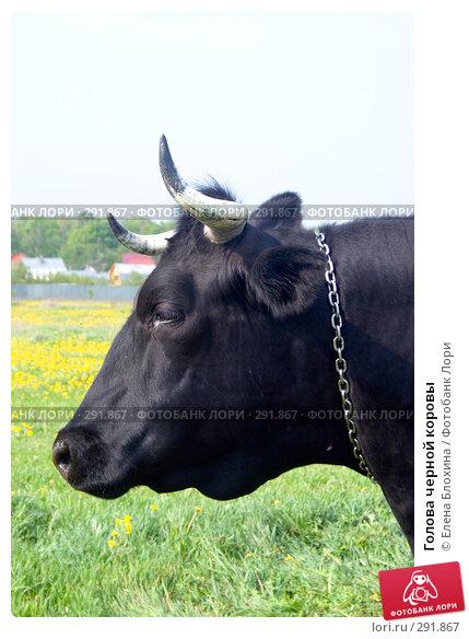 Голова черной коровы, фото № 291867, снято 19 мая 2008 г. (c) Елена Блохина / Фотобанк Лори