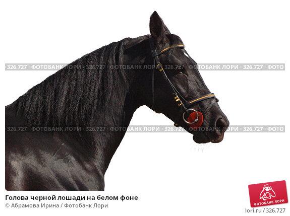 Купить «Голова черной лошади на белом фоне», фото № 326727, снято 24 апреля 2008 г. (c) Абрамова Ирина / Фотобанк Лори
