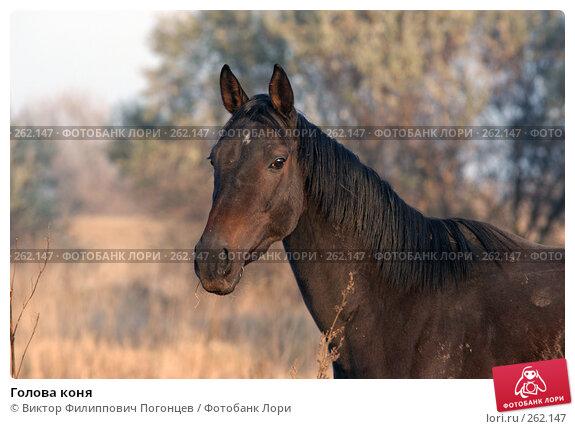 Купить «Голова коня», фото № 262147, снято 6 ноября 2004 г. (c) Виктор Филиппович Погонцев / Фотобанк Лори