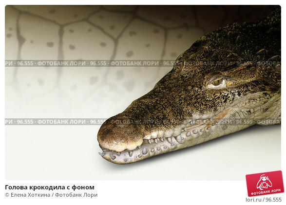 Голова крокодила с фоном, фото № 96555, снято 25 марта 2006 г. (c) Елена Хоткина / Фотобанк Лори