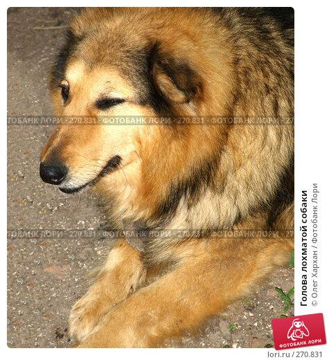 Голова лохматой собаки, фото № 270831, снято 7 мая 2007 г. (c) Олег Хархан / Фотобанк Лори