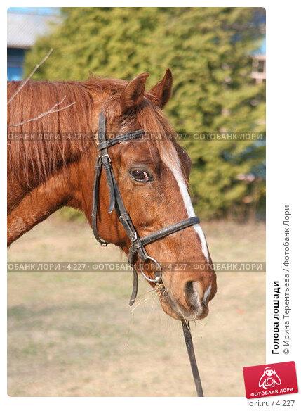 Голова лошади, эксклюзивное фото № 4227, снято 1 мая 2006 г. (c) Ирина Терентьева / Фотобанк Лори