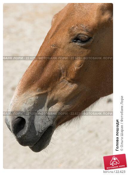 Голова лошади, фото № 22623, снято 25 июля 2006 г. (c) Ольга Шаран / Фотобанк Лори