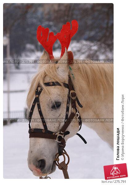 Голова лошади, фото № 275791, снято 7 января 2008 г. (c) Ирина Борсученко / Фотобанк Лори