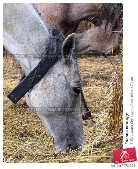 Голова лошади, фото № 278023, снято 3 сентября 2006 г. (c) Ярослава Синицына / Фотобанк Лори