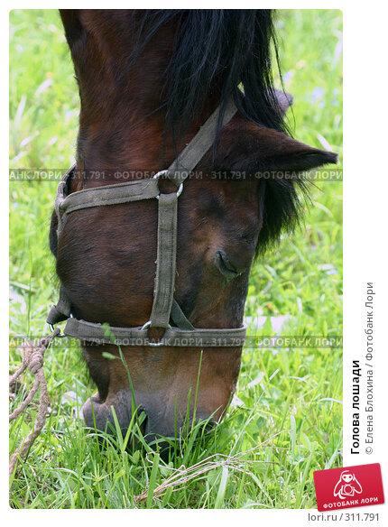 Голова лошади, фото № 311791, снято 29 мая 2008 г. (c) Елена Блохина / Фотобанк Лори